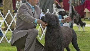 At the PWDCA National Specialty 2010 with handler Danik Dancause