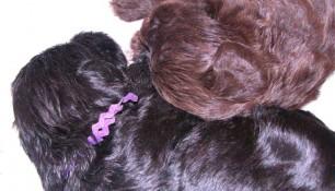 Both violet girls