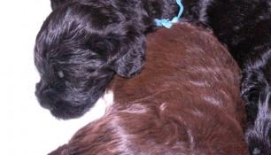 Cuddling pups