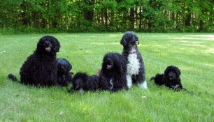 Family portrait, from left, Tikka, Motes, Saras in a blur, dad Shooner, Mom Milly, sister Phoebe