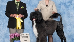 Group 3, Judge Doug Gaudin, handler Kim Wendling, Scarborough KC, 2009