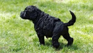 Growing Pup