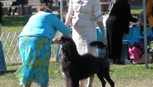 Judge Carla Molinari at the 2007 PWDCA National Specialty in Ventura Calif. Best of Breed ring with handler Molly Extner-Howell