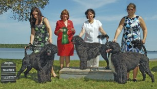Nash (left) with Arielle Berube, Judge Nancy Liebes, Schooner and Roslyn, Saras and Sara Szauerzopf, Best Stud Dog for Schooner at the PWDCC National Specialty 2010
