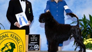 Nash with Kim Wendling and Judge Edd Bivin at the Chicagoland Regional Specialty 2012, Winners Dog, Best of Winners, 5pt major