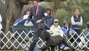 On the move with Danik Dancause, PWDCA National Specialty 2010