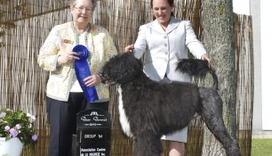 Saras, Group 1 win under Judge Virginia Lyne at the Association Canine de la Mauricie, June 25, 2010