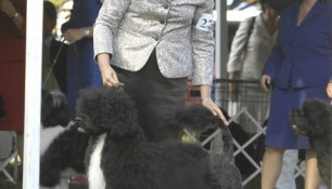 Saras and Kim, ready for Judge Linda Fowler at the 2009 PWDCA National Specialty Best of Breed ring