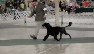 Schooner and Madeira Pup 2
