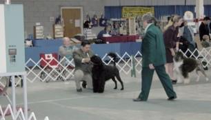 Schooner and Madeira Pup
