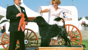 Second in Group Alberta Kennel Club