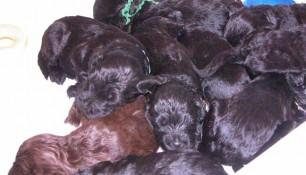 Sleeping mosh pile of pups