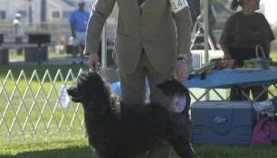 With Danik Dancause in the Veteran Sweeps ring, 2007 PWDCA National Specialty