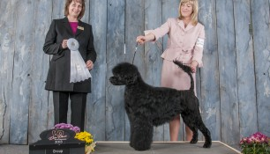 Nash Group 4 Champlain dog Club