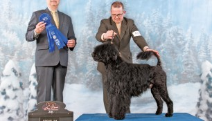 Nash in Group 1 at Ontario Breeders Association