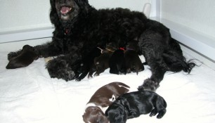 Pups 6 days old