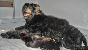 Proud mama Ruby and her new litter