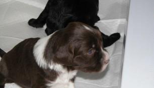 week 4 pups 4
