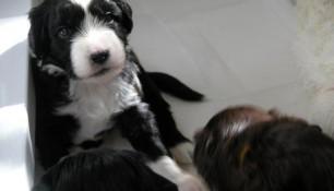 week 4 pups 7