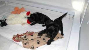 week 4 pups 8