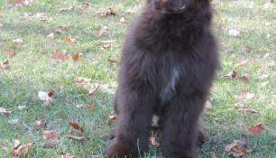 Franklin, a Ruby:Baylee son