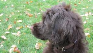 Franklin's noble profile