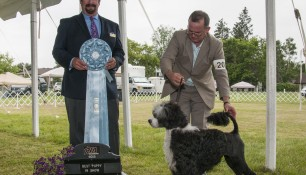 Sophie wins Best Puppy in Show