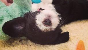 Prepare for puppy-cuteness-overload!