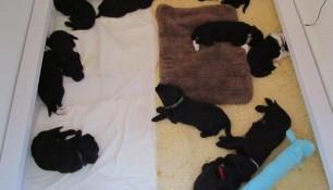 Puppies back in Grafton Ontario