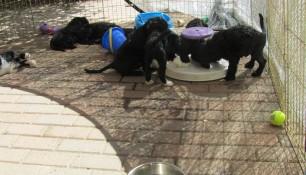 Pups May 15 b
