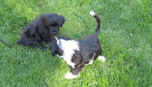 Pups May 15 c