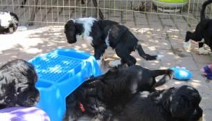 Pups May 15 d