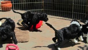 Pups May 15 e