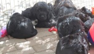 Pups May 15 i