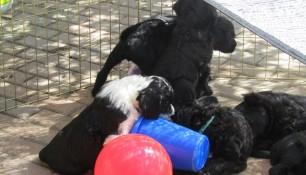 Pups May 15 j