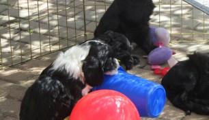 Pups May 15 k