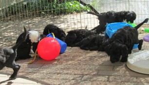 Pups May 15 m