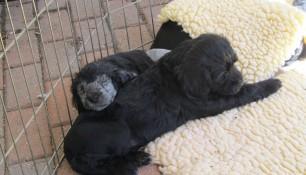 Pups May 15 n