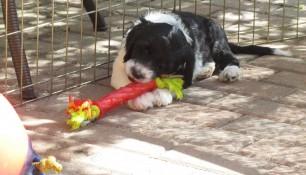 Pups May 15 o