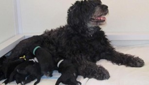 Ruby and her pups