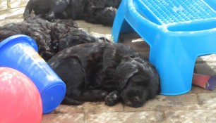 Sleepy pups